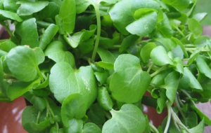 Watercress Wallpapers