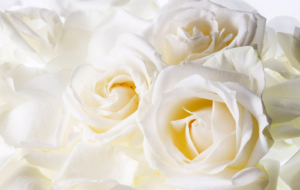 White Flower Computer Wallpaper