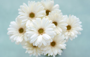 White Flower HD Background