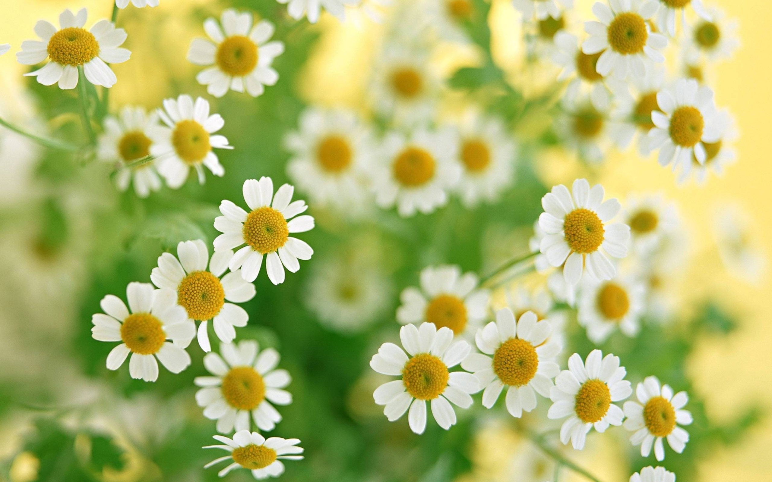 White flower hd wallpapers wallpapers white flower photos white flower pictures mightylinksfo