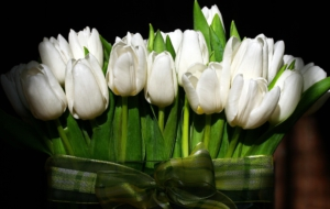 White Tulips Wallpapers