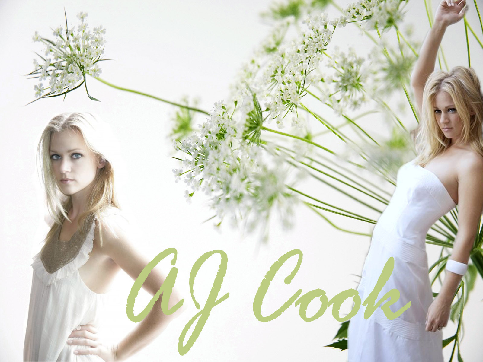 all a j cook - photo #19