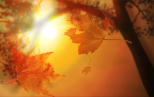 Autumn HD