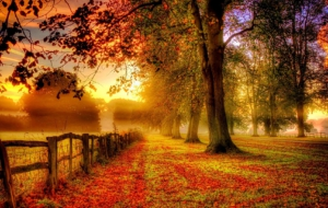 Autumn HD Wallpaper
