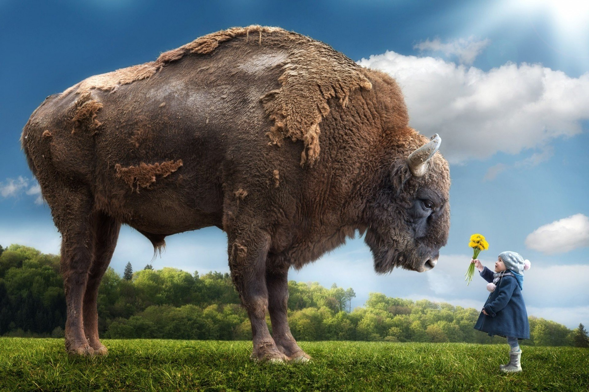 Surrealism Hd Wallpapers Backgrounds High Definition: Bison HD Wallpapers