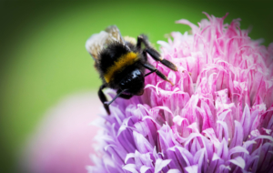 Bumble Bee HD Background