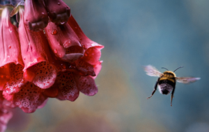 Bumble Bee Widescreen