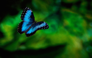 Butterfly HD Deskto