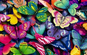 Butterfly Wallpapers HD