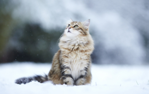 Cat HD Wallpaper