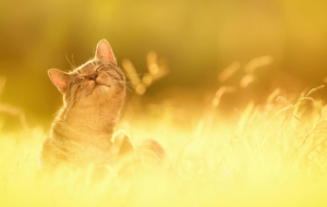 Cat High Quality Wallpapers