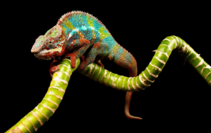 Chameleon Pictures