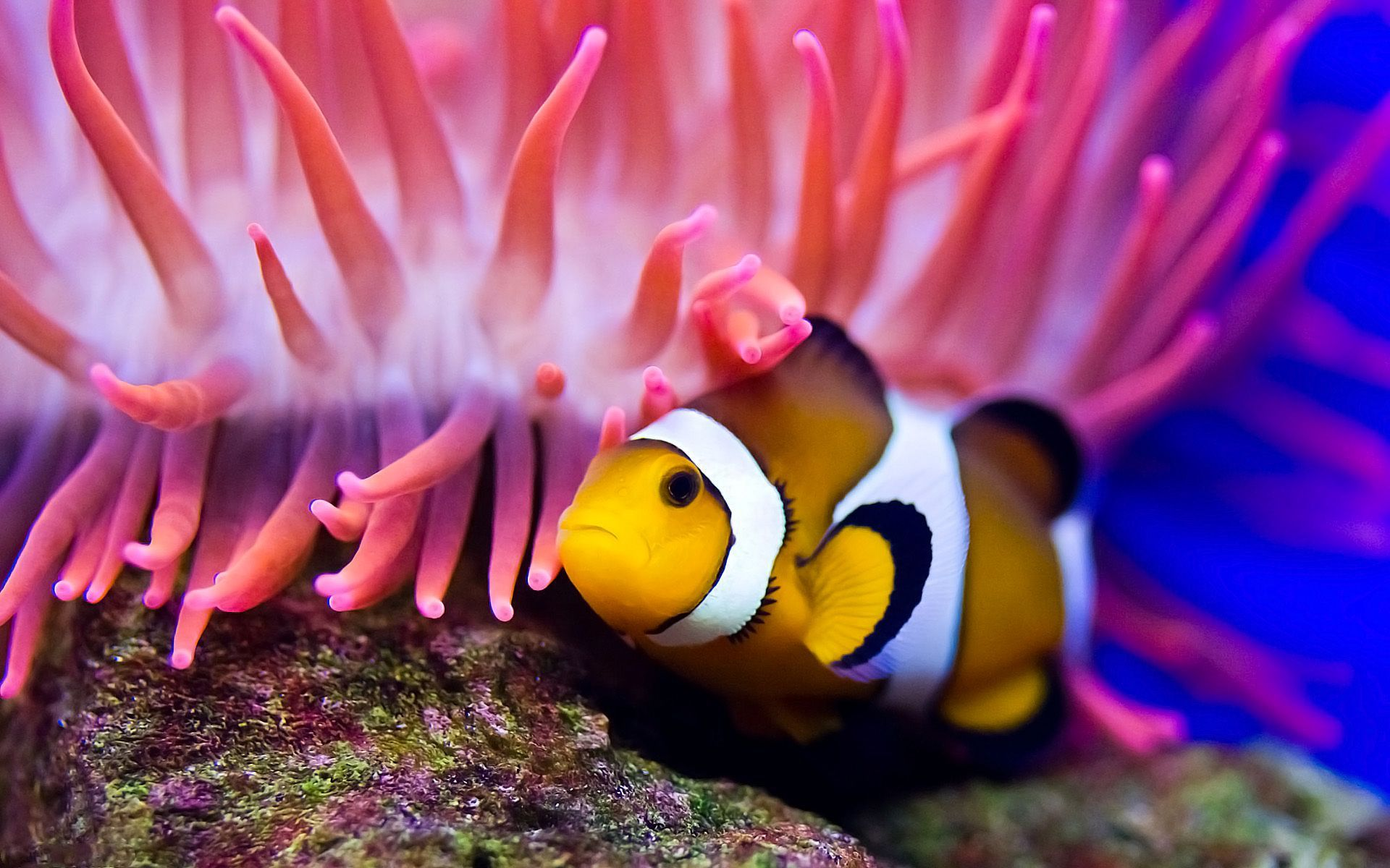 clown fish essay Unlike most editing & proofreading services, we edit for everything: grammar, spelling, punctuation, idea flow, sentence structure, & more get started now.