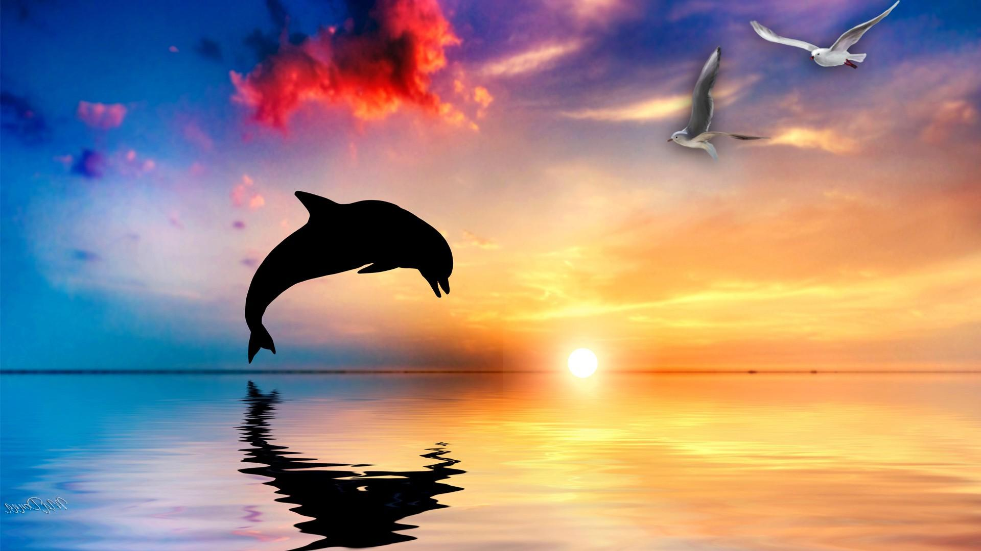 Hd Wallpapers Images: Dolphin HD Wallpapers