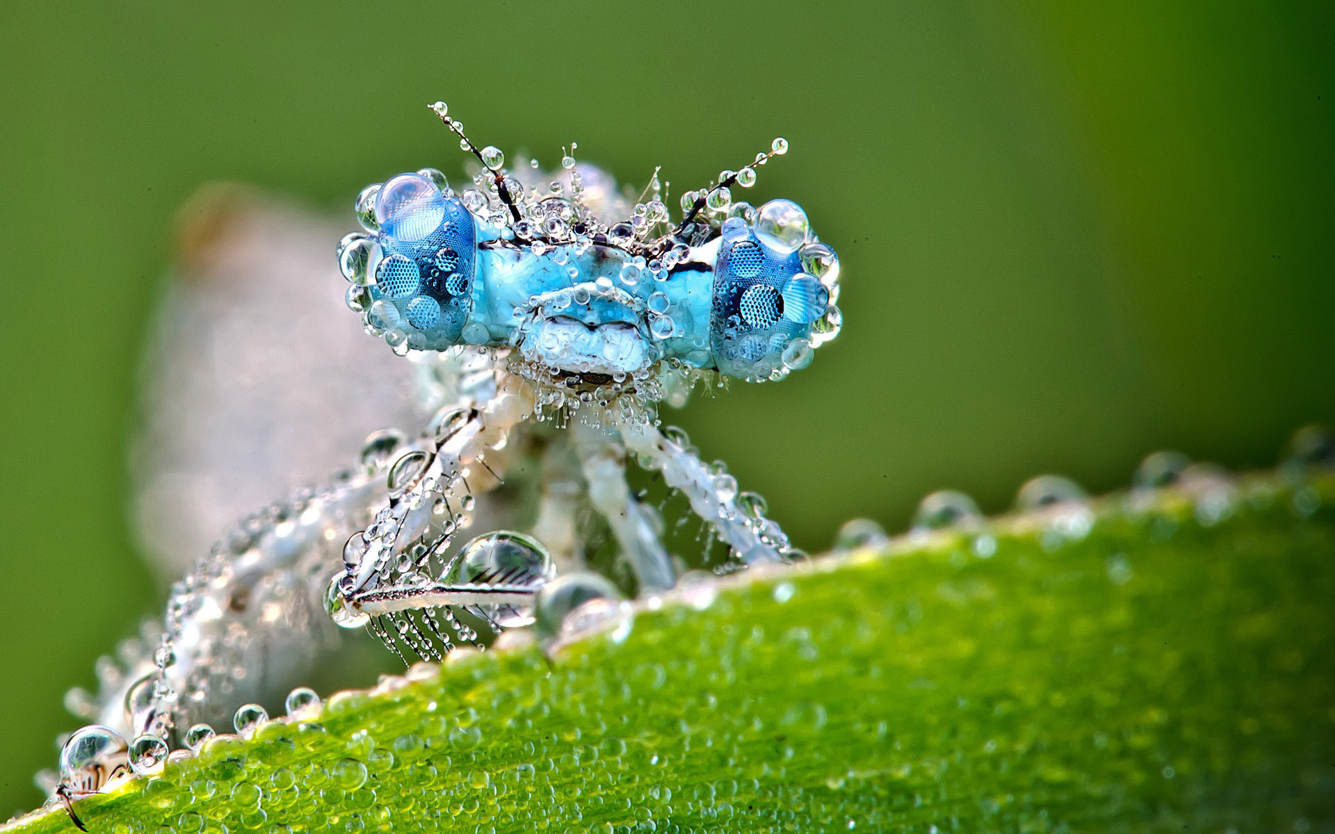 Hd Wallpapers Backgrounds: Dragonfly HD Wallpapers