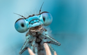Dragonfly Full HD