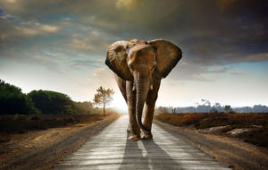 Elephant High Definition Wallpapers