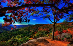 Fall Widescreen