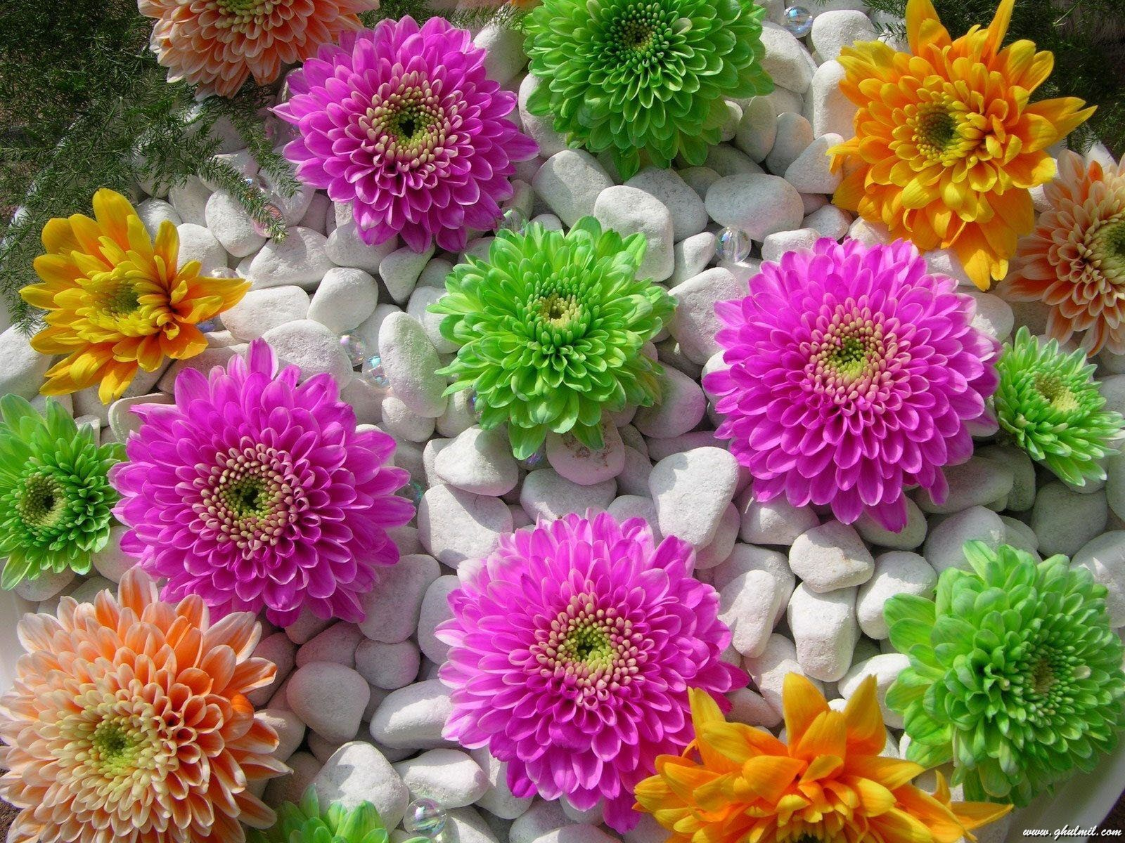 all flowers download