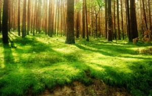 Forests Images
