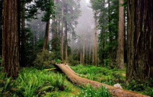 Forests Photos