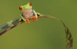 Frog Images