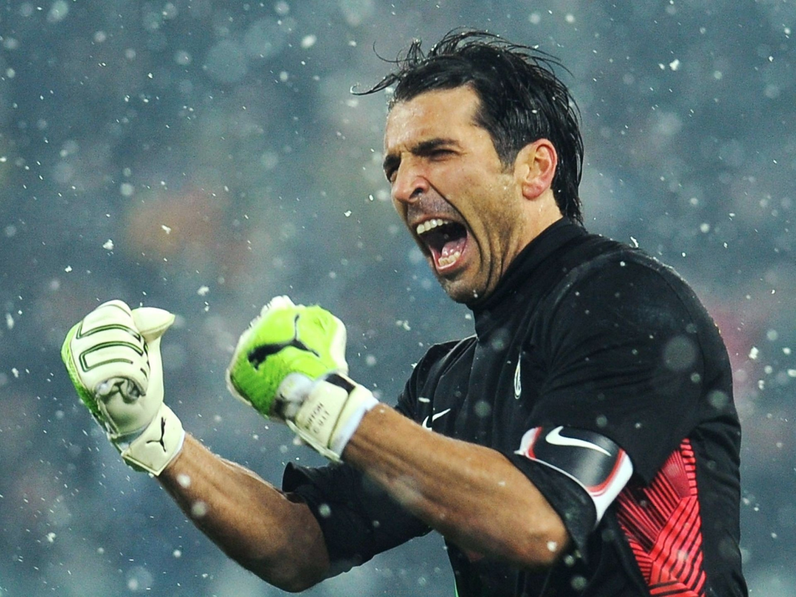 best wallpaper buffon - photo #3