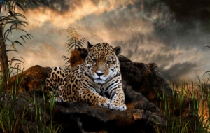 Jaguar High Definition Wallpapers