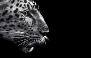 Jaguar Full HD