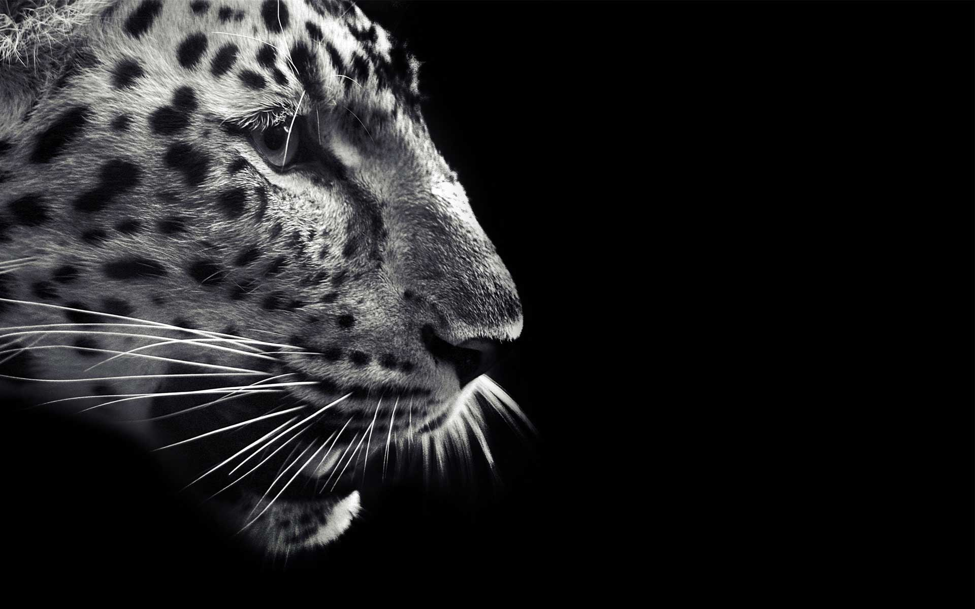 Animals Jaguars Wallpapers Hd Desktop And Mobile: Jaguar HD Wallpapers