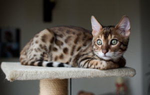 Leopard Cat Images