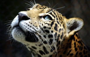 Leopard Photos