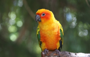 Parrot Wallpapers HD