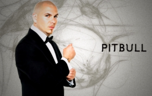 Pitbull Photos