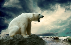 Polar Bear Wallpaper