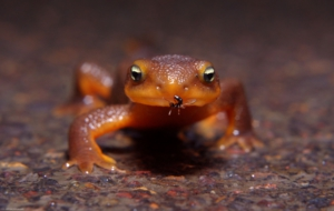 Salamander High Quality Wallpapers