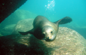 Sea Lion Images