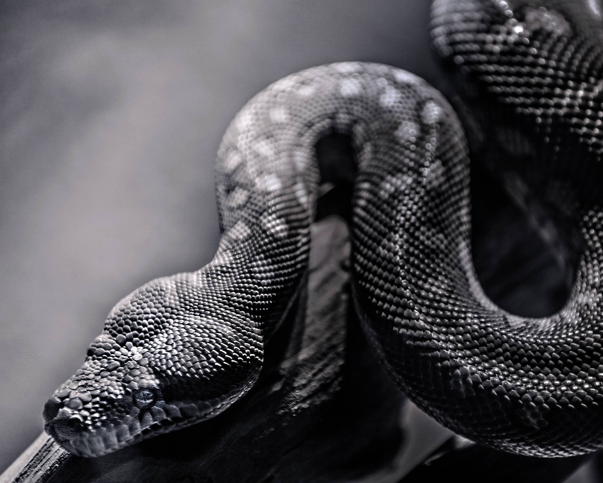 Snake HD Wallpapers