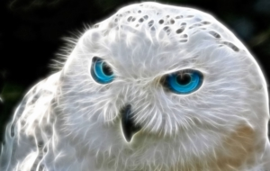 Snowy Owl Full HD