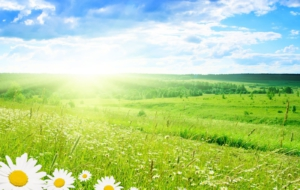 Spring HD Wallpaper