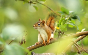 Squirrel Images