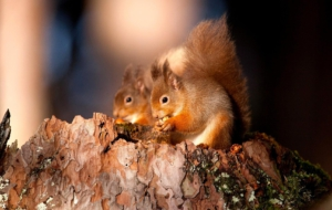 Squirrel Photos
