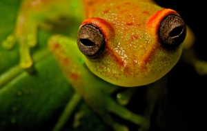 Tree Frog HD Background