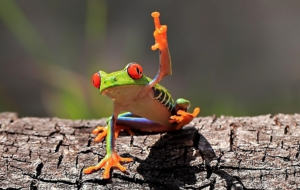 Tree Frog HD Deskto