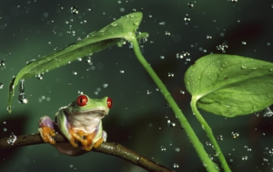 Tree Frog HD Wallpaper