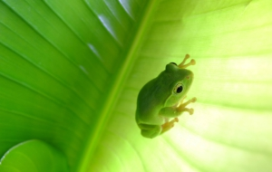 Tree Frog High Definition Wallpapers