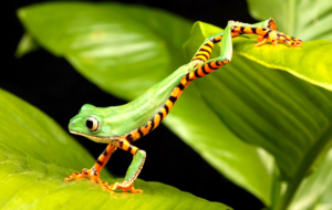 Tree Frog High Quality Wallpapers