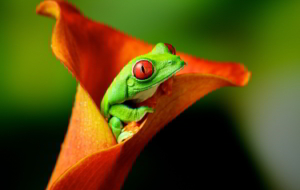 Tree Frog Photos