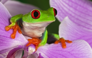 Tree Frog Pictures