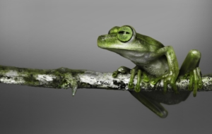 Tree Frog Full HD